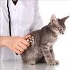Ветеринарные клиники в Элисте